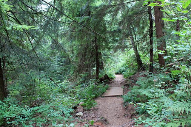 Baden Powell Trail above the Delbrook neighbourhood in North Vancovuer