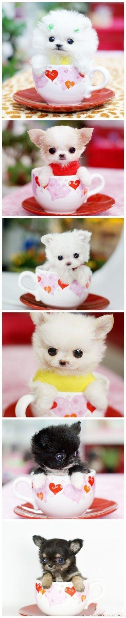 cute dogsxox ahhh so smalllxox