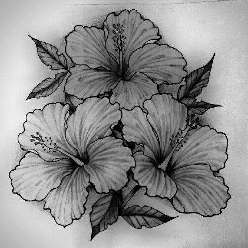 Dessin fleur d hibiscus pour tatouage tatouage - Dessin d hibiscus ...