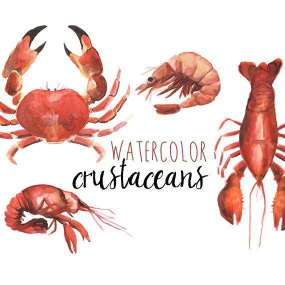 Watercolor Crustacean Clip Art Nautical by DigitalPressCreation