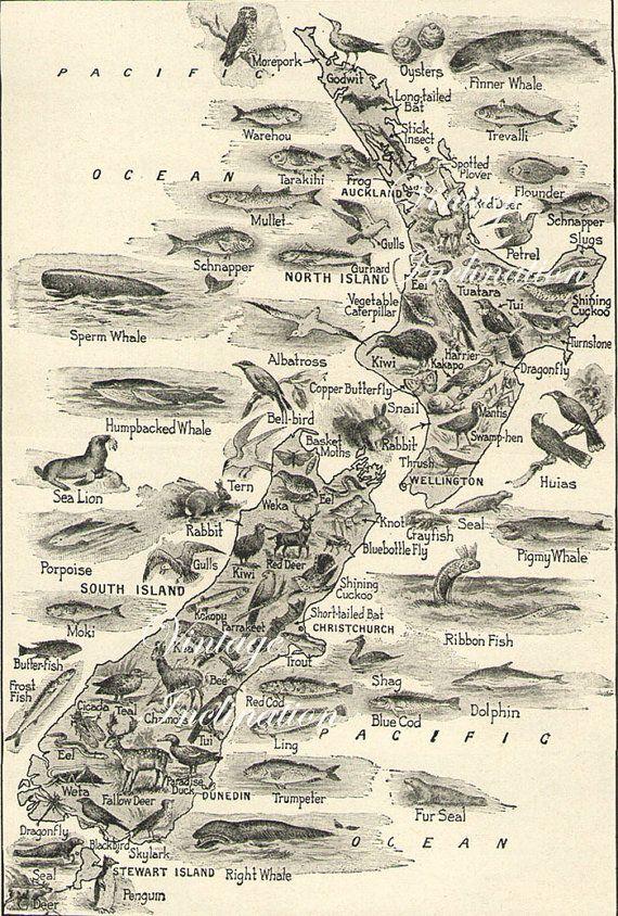 1930s Antique Vintage NEW ZEALAND Animals map original b/w map for framing. $12.50, via Etsy.