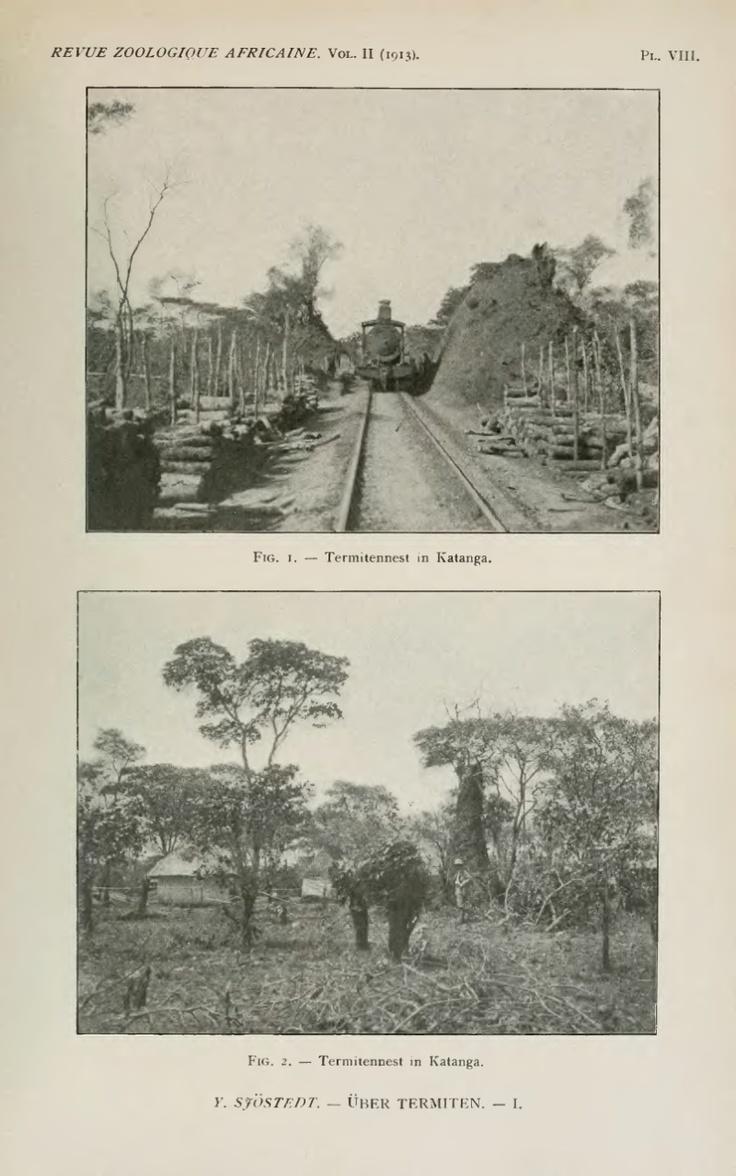 Über Termiten aus dem inneren Kongo Rhodesia und Deutsch-Ostafrika - BioStor