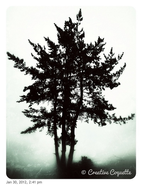 Trees <3: Awesome Trees, Creative Photo, Natural Photography, Black And White, Beautiful Trees, Photographers Genius, Magic Trees, Photography Architecture Art, Leaf Trees