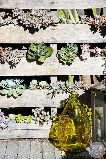Made with love: upcycled painters trestle forms a vertical garden for succulents at this Sydney stylist's beach chic home - Home Beautiful