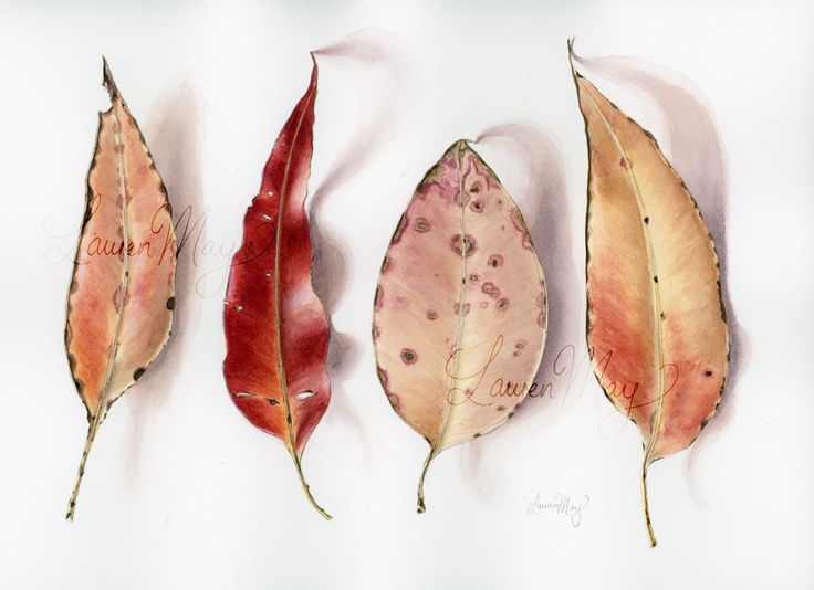 A watercolour painting by Lauren May SK