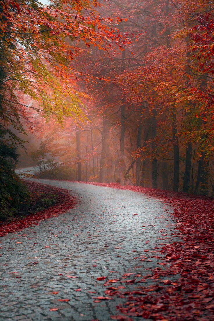 ~~Red spring  | autumn in Bolu Yedigöller, Turkey | by Zeki Seferoglu~~