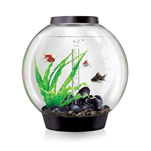 Fish will love this biOrb Classic with Tropical Heater Pack, 60 Litre. I get a commission for purchases made through the link in this pin.