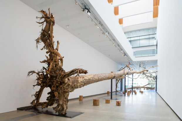 Installation view of Eucalyptus at the Gallery of Modern Art, Brisbane, 2013. Photo by Natasha Harth, courtesy Queensland Art Gallery | Gall...