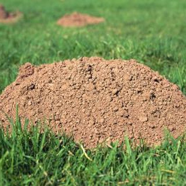 How To Get Rid Of Ground Moles With Dawn Soap More Mole And Gardens Ideas