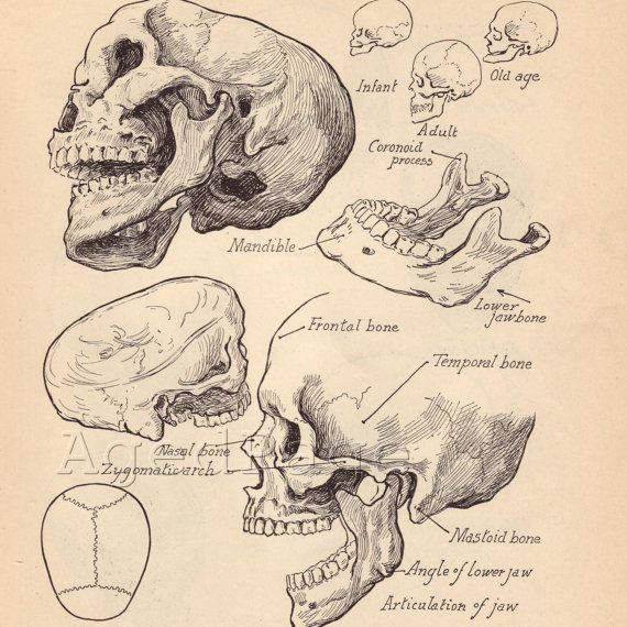 Vintage Anatomy Print, Antique Artistic Human Anatomy Chart, Book Illustrations, 1930s Prints to Frame, Skull Skeletal Chart, Double Sided via Etsy