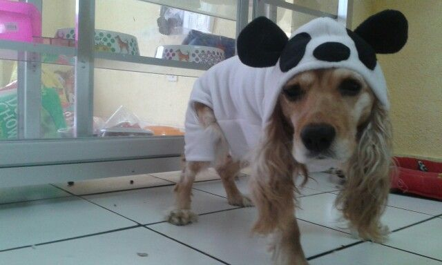 Osoo panda ❤ ropa para perros