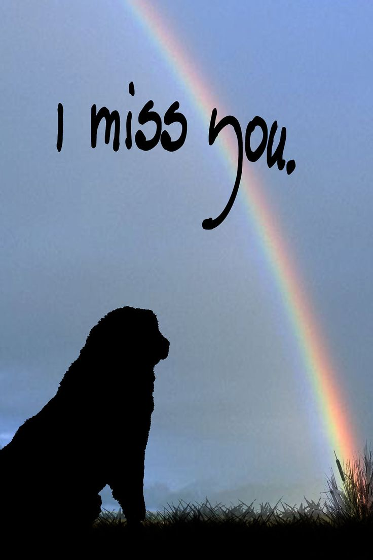 Leonberger looking at a Rainbow. $3.50, via Etsy.
