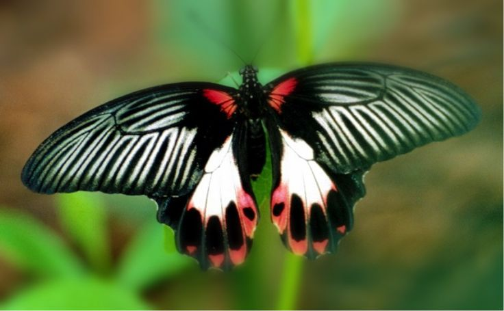 Butterfly Creek   Places to visit in Auckland  Sudima Hotels   Sudima Hotels