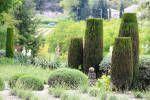 Кипарис вечнозелёный (обыкновенный)