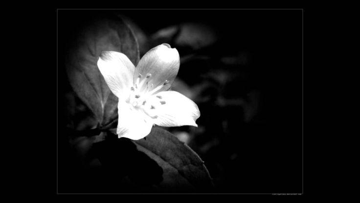 Λευκό Μου Γιασεμί - Έλλη Πασπαλά