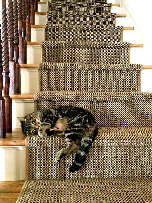 Cat Napping On Staircase