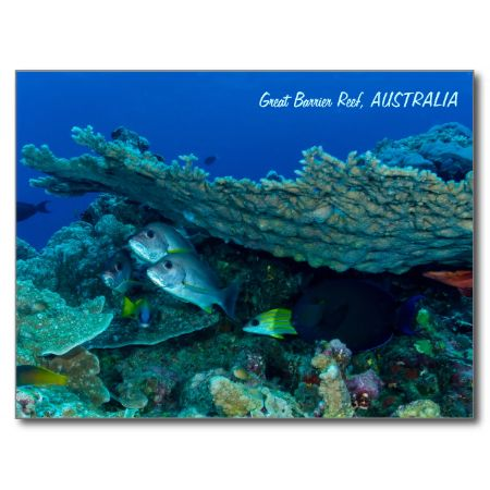 A postcard featuring a group of fish chilling out under a coral overhang on Australia's Great Barrier Reef