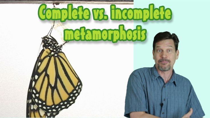 What's the Difference Between Complete & Incomplete Metamorphosis? Larva...