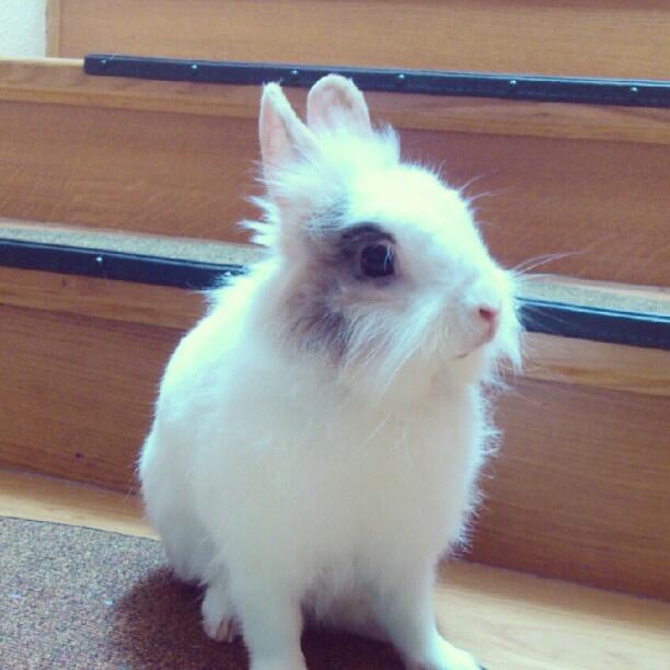 #bunny #rabbit #krolik » @aridka » Instagram Profile » Followgram