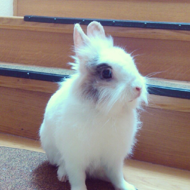 #bunny #rabbit #krolik » @aridka » Instagram Profile » Followgram