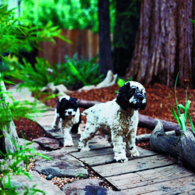 8 Backyard Ideas To Delight Your Dog: 53 Best Dog Fence Windows Images On Pinterest