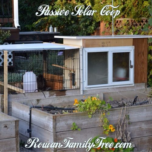 Winter was coming and we needed a new home for our two backyard chickens. Voila! A passive solar chicken coop made out of old doors and windows.