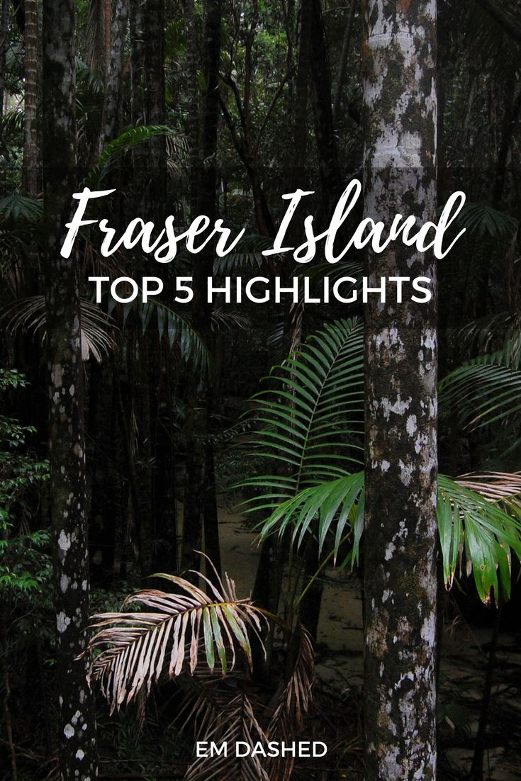 Some particularly unusual highlights from the world's largest sand island: Fraser Island (K'gari) in beautiful Queensland, Australia.