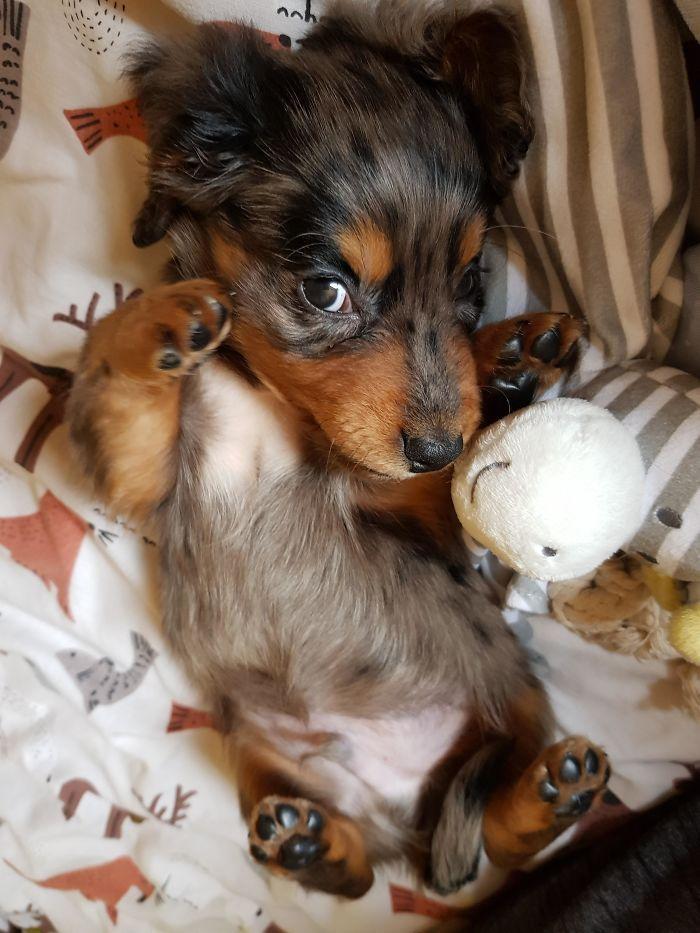 My First Puppy Reddit Meet Darcy Cute Little Puppies Cute