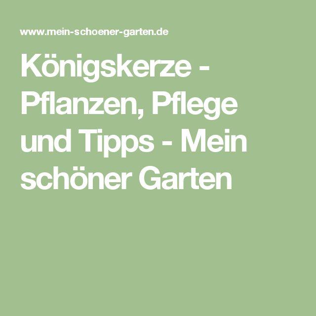 Königskerze - Pflanzen, Pflege und Tipps - Mein schöner Garten