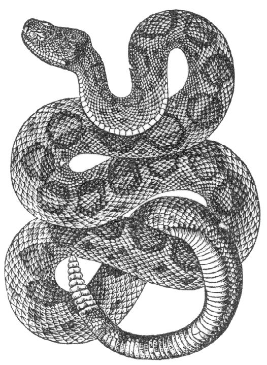 Line Drawing Snake : Best images about snake on pinterest photos drawings