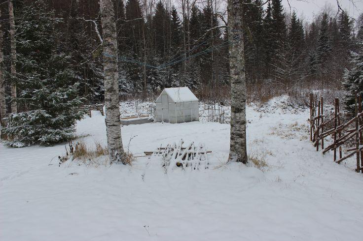 Kasvitarha talvella