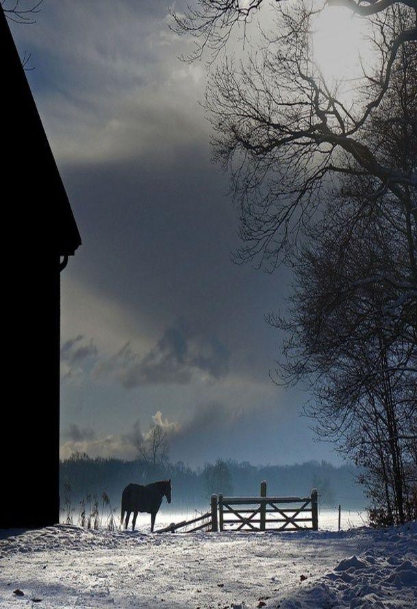 Winter At The Barn