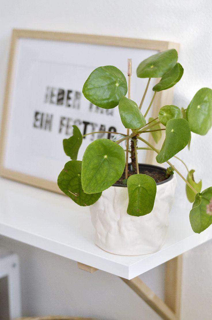 die besten 25 chinesische geldpflanze ideen auf pinterest geldanlage chinesische pflanzen. Black Bedroom Furniture Sets. Home Design Ideas