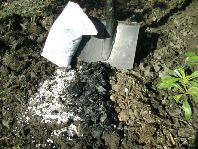 Внесение калийных удобрений под перекопку