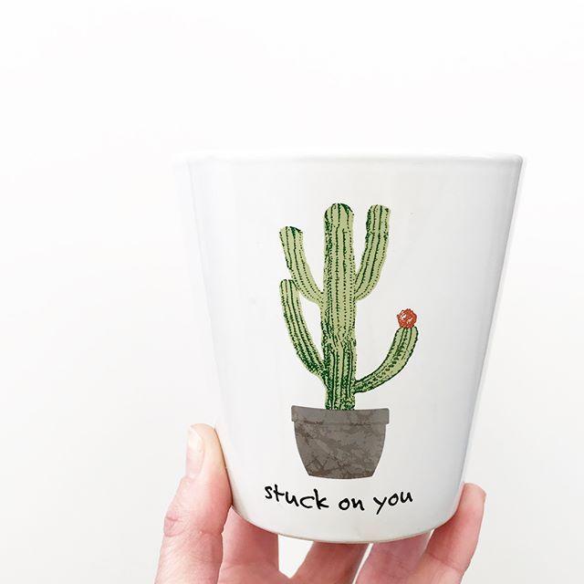 Mini Cactus Planter Mini Cactus Walmart Finds Cactus Planter