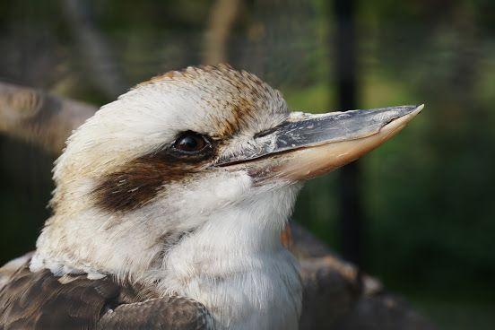 Lachender Hans im Guldborgsund Zoo & Botanical Garden in Denmark  #Zoo – Google+