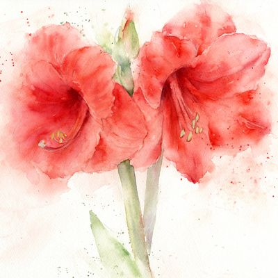 best  amaryllis flower ideas ideas only on, Natural flower