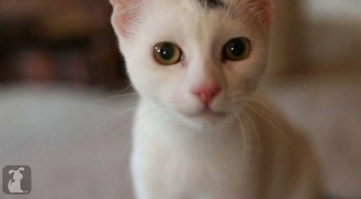 Un gattino disabile cammina di nuovo grazie ad un pò di aiuto - http://www.ahboh.it/gattino-disabile-cammina-thumper/