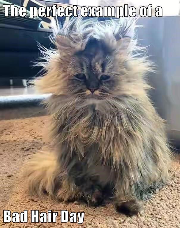 The perfect example of a  Bad Hair Day http://cheezburger.com/9117706240