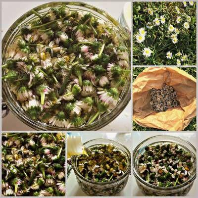 Oleolito rassodante alle margherite - non solo coroncine di fiori!