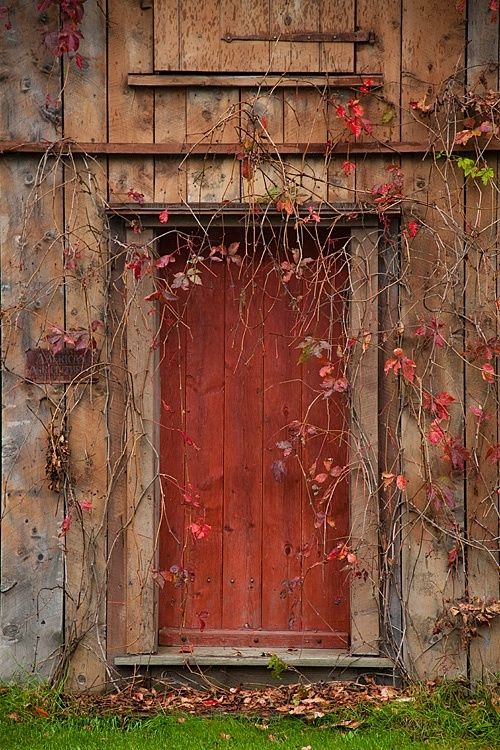 Brick red door framed by vines with red leaves