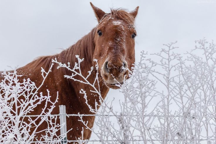 Sex ze zwierz ttami i koniem
