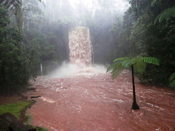 Millaa Millaa falls in flood 2