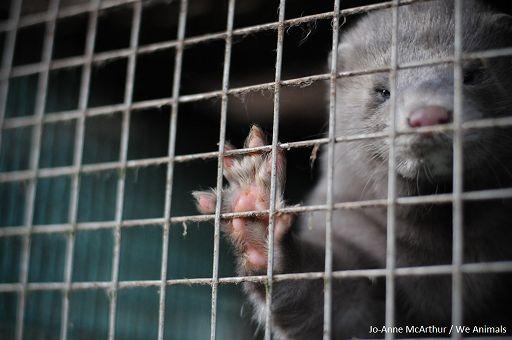 Het is werkelijk bizar – en wreed – om de huid van een gedood dieren te dragen en dat mode te noemen. Help ons om wrede bontfokkerijen in Ierland te stoppen.