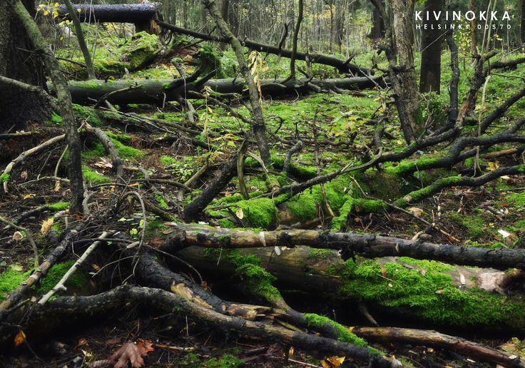 https://flic.kr/p/df8fvN | Kivinokka | Puun kiertokulkua Kivinokan metsissä.