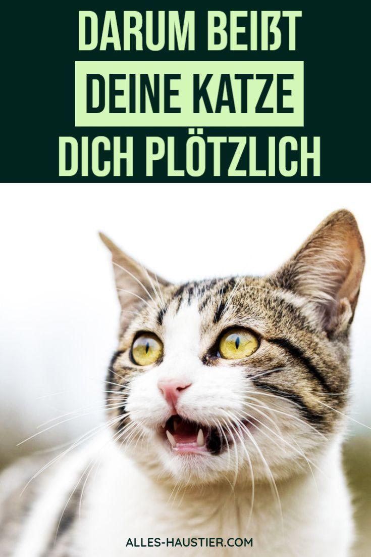 Pin Auf Katzen Liebe