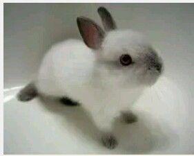 Cutie rabbit