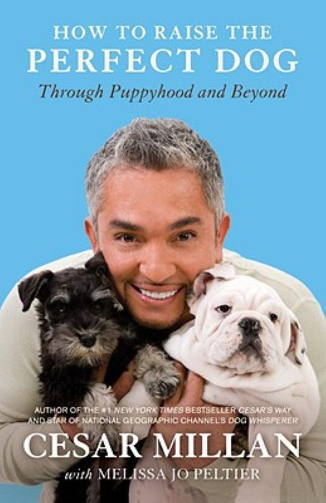 How to Raise the Perfect Dog: Through Puppyhood and Beyond by Cesar Millan #puppytrainingbitingcesarmillan