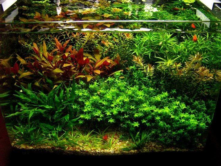 8g nano planted dutch tank aquariums and ponds pinterest for Plante aquarium
