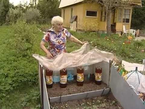 Посадка огурцов Огород без хлопот